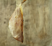 Salted fish Stock Photography
