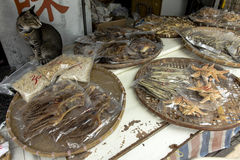 Salted fish and cat Royalty Free Stock Images
