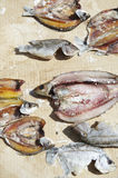 Salted Fish Drying in the Sun Royalty Free Stock Image