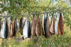 Salted Fish hang it Royalty Free Stock Image