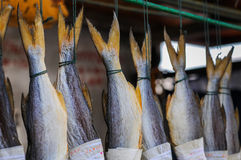 Salted fish hanging out Royalty Free Stock Image