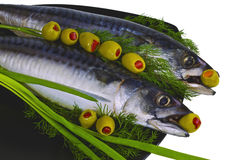 Still life with mackerel. Salted fish mackerel decorated with greenery and photographed on a white background Royalty Free Stock Image