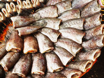 Salted fish. Is made from freshwater fish species , have delicious taste and is economically important Royalty Free Stock Image