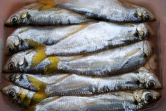 The salted fish-pelada Stock Photos