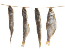 Salted fish on a rope Royalty Free Stock Photography