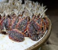 Salted fish. With sesame on tray stock images
