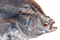 Salted flatfish Stock Images