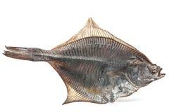 Salted flatfish Stock Photos