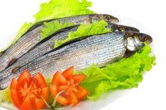 Salted fresh fish Royalty Free Stock Image