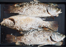 Salted fresh grouper fish on wooden tray.  Stock Photo