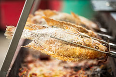 Salted grilled fish Royalty Free Stock Image