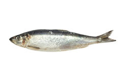 Salted herring Royalty Free Stock Image