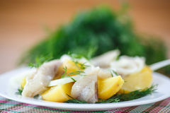 Salted herring with boiled potatoes Stock Image