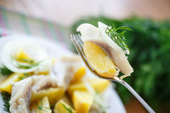 Salted herring with boiled potatoes Royalty Free Stock Photo