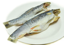 Salted herring fish Royalty Free Stock Images