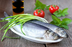 Salted herring with fresh green onion Stock Images