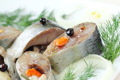 Salted herring in oil and marinade Stock Images