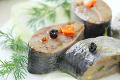 Salted herring in oil and marinade Stock Image