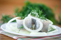 Salted herring with onion rings and dill Stock Photography