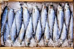 Salted herring for sale at the fish market. Fish in salt in a wooden box at the market Stock Images