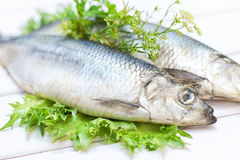 Salted herring on a white wooden table Stock Photo