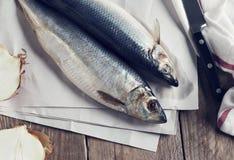 Salted herring. Stock Image