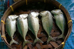 5 salted mackerel in basket in a market. They seems angry and fight each others Stock Images