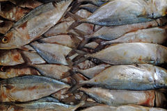 Salted Mackerel fish. In the market Royalty Free Stock Image