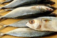 Salted mackerel fish Stock Image