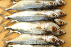Salted mackerel fish Stock Photography