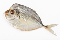 Salted moonfish Royalty Free Stock Photography