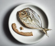 Salted moonfish with crust of bread Stock Image