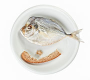 Salted moonfish with crust of bread on white plate Royalty Free Stock Photo