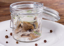 Salted mushrooms with cream sauce Royalty Free Stock Image