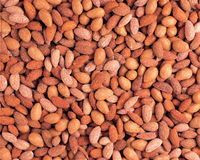 Salted Nuts Royalty Free Stock Photos