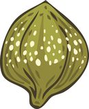 Salted and Pickled Caper Bud. Hand Drawn Illustration. Isolated Object Royalty Free Stock Photos