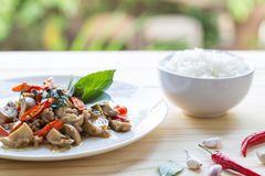 Salted pork with chili & Basil leaves in plate and rice Royalty Free Stock Images