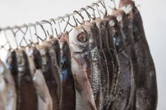 Salted fish hung on hooks and dried in the open air, close-up stock photos