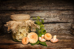 Salted russula Royalty Free Stock Photo