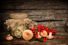 Salted russula Stock Image