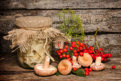 Salted russula Royalty Free Stock Images