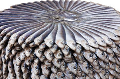 Salted sardines Royalty Free Stock Images
