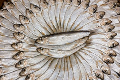 Salted sardines Stock Image