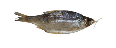 Salted sea roach fish. Isolated on the white background Stock Image