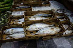 Salted skipjack fish packed with bamboo webbing on sale in Bogor traditiona market Royalty Free Stock Images