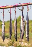 Salted Spanish Mackerel Royalty Free Stock Photography