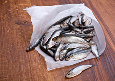 Salted spat fish Stock Photos