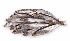 Salted sprats on white Royalty Free Stock Images