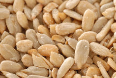 Salted sunflower seeds Stock Photography