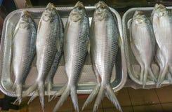Salted Terubok fish (Tenualosa toli). At Satok Wet Market, Kuching, Sarawak Borneo Island Royalty Free Stock Images